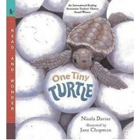 One Tiny Turtle (Read and Wonder)